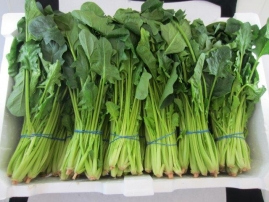 Spinach ready for evaluation
