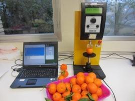 Mandarine firmness