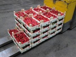 Descarga de fresas en Kölla