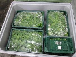 El FRESHBOX vuelve recargado de espinaca fresca