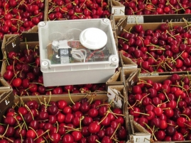 Cherries inside the Freshbox container with the Integrated Sensor Kit