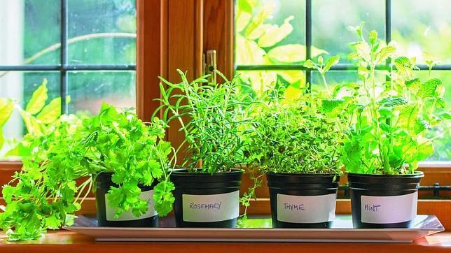 Trucos infalibles para tener un huerto en el sal n de tu for Cultivar vegetales en casa