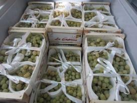 Ahora es el turno de las uvas