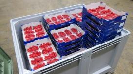 Vuelve el Freshbox a España con frambuesas frescas