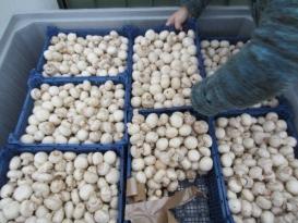 Vuelve el Freshbox a España con champiñones frescos